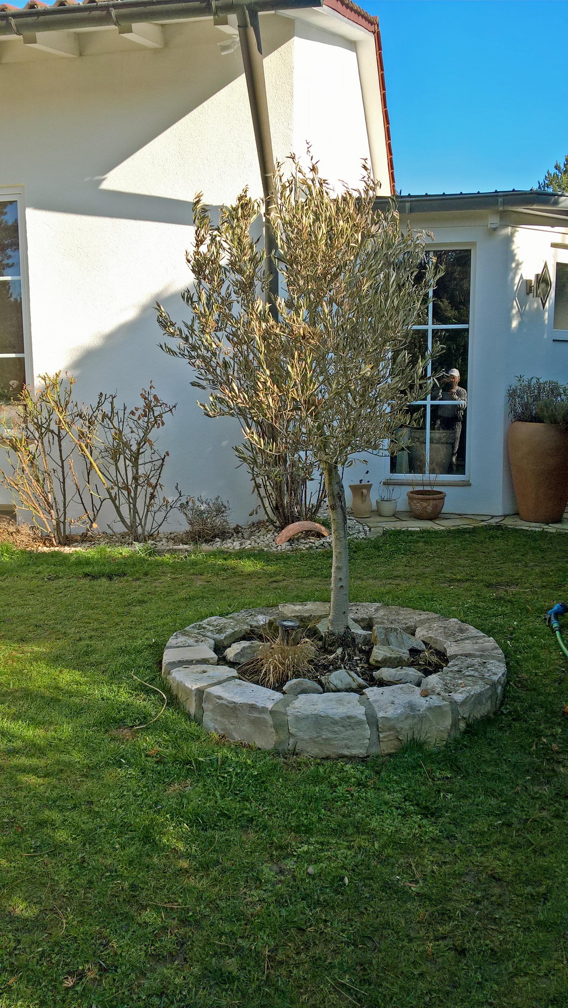 Garten Mediterran Bepflanzung Garten Wolk Garten Wolk